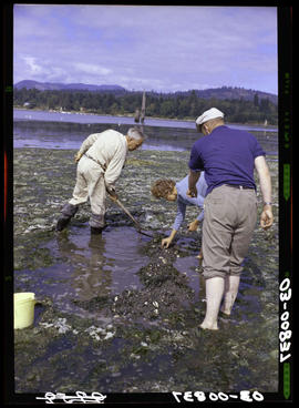 Digging Clams At Sooke