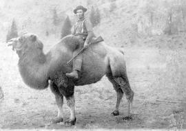 The Last Of The Camels From The Cariboo Road; Photo Taken At Grand Prairie, Westwold; W.H. Smith With Rope; See Also A-00347.