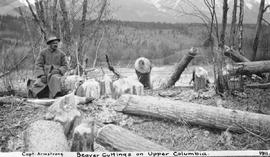 """Captain Armstrong; beaver cuttings on Upper Columbia."""