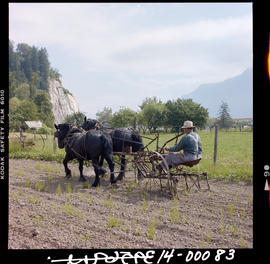Agassiz. Ploughing A Field With Horses