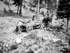 Helping a freight wagon uphill en route to Divide Lake during the Reserve Survey of 1907.