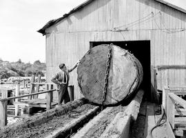 9 Foot Fir Log, Sweeney Cooperage Victoria