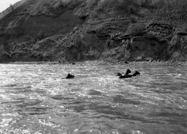 Pack horses swimming across the Chilcotin River