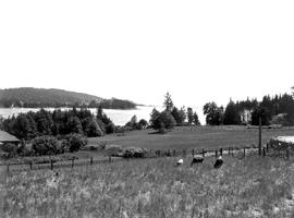 Farm Scene Near Sooke Harbour.