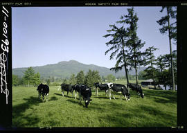 Cowichan Valley Dairy