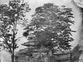 [Canton, China] 5)  [Hilltop building and large ornamental trees].