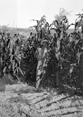 """Mr. Elliott's godder corn on bottom land""."
