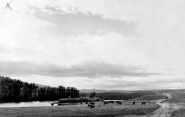 Douglas Lake Cattle Ranch Near Minnie Lake
