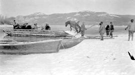 Loading packhorses onto a flat-bottomed boat at Stuart Lake, Fort St. James, BC.
