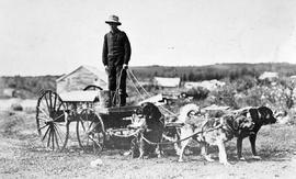 Dog-powered water carts in Atlin.