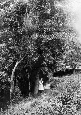 Young woman [Gwen] in the garden at Point Ellice; A.D. Crease Collection, Box 1.