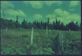 Indian Graveyard, Skidegate Queen Charlotte Islands