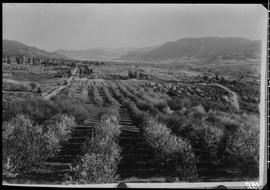 Orchards And Homes, Penticton