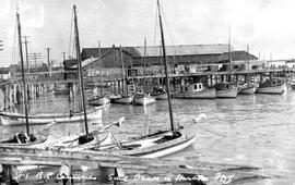 Richmond; BC Canneries; Sail Boats In Harbour