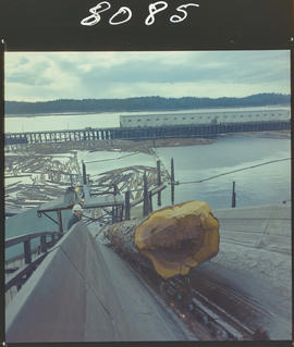 Logs On Conveyor, Pulp Mill, Prince Rupert