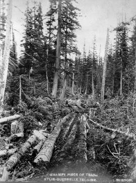 A swampy piece of trail; Atlin-Quesnel telegraph line.
