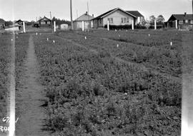 Forest Service; Shelbourne nursery; E.P. 59.