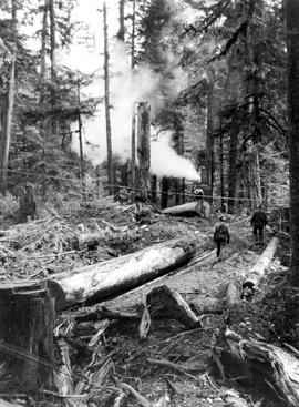 Logging the west coast of Vancouver Island.