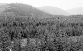 Natural Regeneration Of Douglas Fir At Cowichan Lake