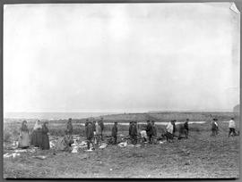 Indian hunting party at oceanside; it appears to be a duck or goose shoot, with the women cleanin...