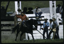 Bronc Riding Williams Lake Stampede