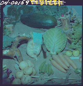 100 Mile House Fall Fair; vegetable display