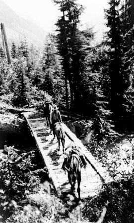 Swannell Survey; a log bridge.
