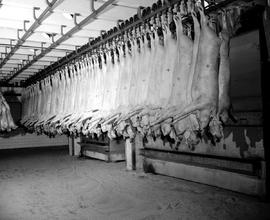 Meat Packing - Pork Carcasses