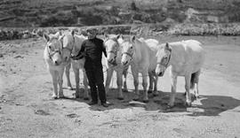 A man with five sturdy ponies