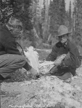 Ernie Money and Harry McLean pluck a goose at Atna Lake