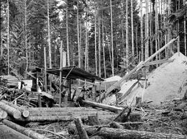 Portable Sawmill At Horne Lake