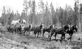 An eight-horse freight team on the Cariboo Road.