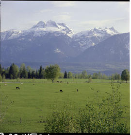 Farm View South Of Revelstoke; Mount Begbie In The Background.