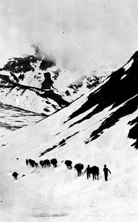 Swannell Survey; pack horses in a mountain range.