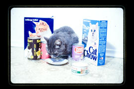 Packaged Products - Cat Food