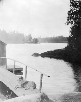 A dog on the ramp of the Point Ellis boathouse; A.D. Crease Collection, Box 1.