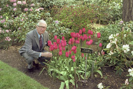Lieutenant Governor Henry Bell-Irving at Government House with the General Bell-Irving tulip.