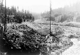 """Logged off area near the Nanaimo Dam, 17th Jul 1931"", No. 59."