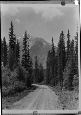 Road Near Kootenay Crossing