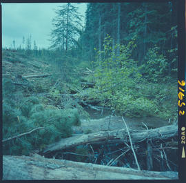 Stream Damage From Logging