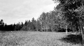 """Old Hay meadows, 59 miles on the Cariboo Road north of Clinton; Pacific Great Eastern Railw..."