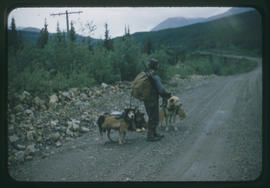 Yukon Joe with three pack dogs