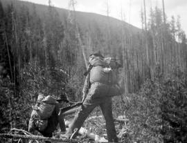 Surveyors negotiating a windfall near Moyie.