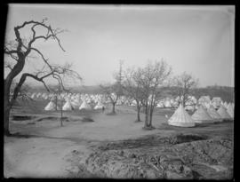 View of Willows Military Camp