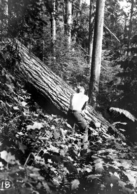 Believed to be construction of Scotch Creek Trail; GR-0943, box 8, file 4.