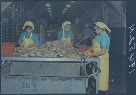 Crab Cannery, Masset Queen Charlotte Islands