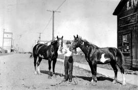 """Two Spot and Four Spot are 'stunt' horses. Two Spot was caught from a wild band i..."