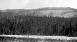 Burn Caused By Yukon Telegraph Builders Little Nass River.