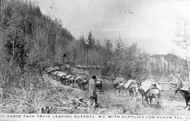 """50 horse pack train leaving Quesnel BC with supplies for Yukon Tel."""