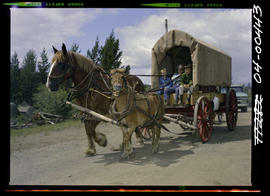 Covered Wagon Anahim Stampede